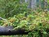 morskie-oko-palenica-wkasmundzka-czarny-staw-kazalnica-rysy-sierpien-2010-017